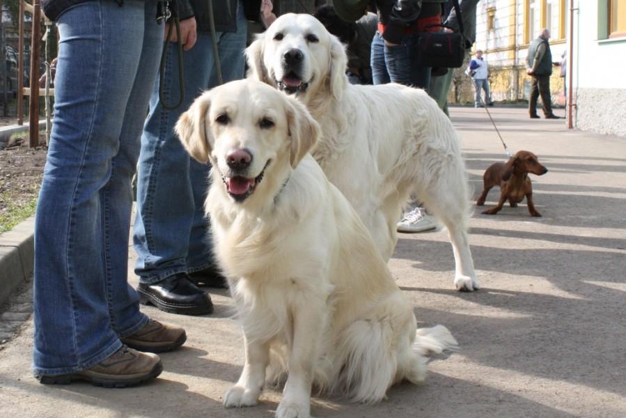 Daisynka s Aronkem čekají na posouzení
